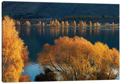 Willow and poplar trees in autumn, Lake Wanaka, Otago, South Island, New Zealand Canvas Art Print