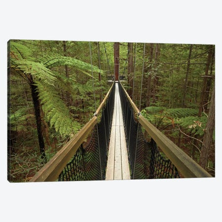 Redwoods Treewalk At The Redwoods (Whakarewarewa Forest), Rotorua, North Island, New Zealand Canvas Print #DWA49} by David Wall Canvas Wall Art