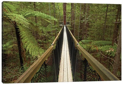 Redwoods Treewalk At The Redwoods (Whakarewarewa Forest), Rotorua, North Island, New Zealand Canvas Art Print