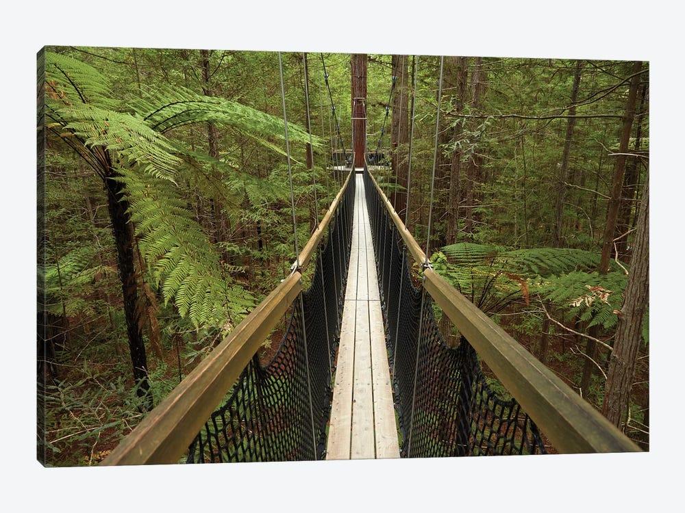 Redwoods Treewalk At The Redwoods (Whakarewarewa Forest), Rotorua, North Island, New Zealand by David Wall 1-piece Canvas Art Print