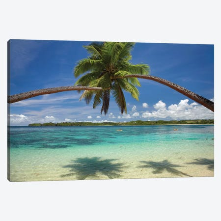 Hugging Palm Trees Over Cuvu Harbour, Coral Coast, Viti Levu, Fiji Canvas Print #DWA4} by David Wall Art Print