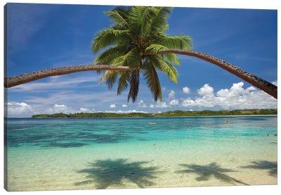 Hugging Palm Trees Over Cuvu Harbour, Coral Coast, Viti Levu, Fiji Canvas Print #DWA4