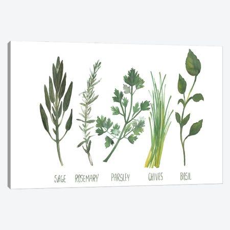 Watercolor Herbs Canvas Print #DWD46} by Dogwood Portfolio Canvas Wall Art