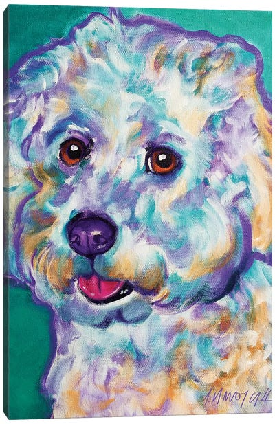 Ruben The Bichon Canvas Art Print