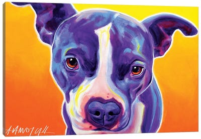 Sadie The Pit Bull Canvas Art Print