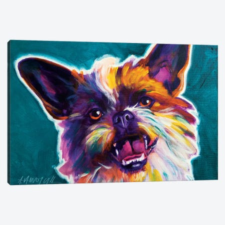 Spicey The Brussels Griffon Canvas Print #DWG128} by DawgArt Canvas Art Print