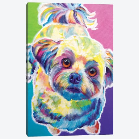 Ziggy The Maltipoo Canvas Print #DWG144} by DawgArt Canvas Artwork