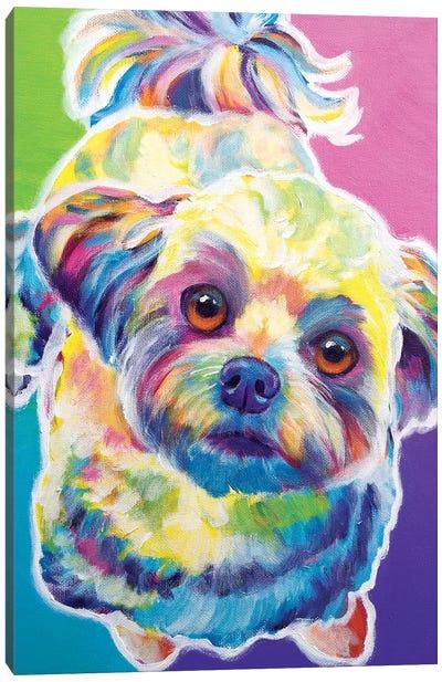 Ziggy The Maltipoo Canvas Art Print