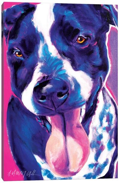 Bella The German Short Hair Pointer Canvas Art Print