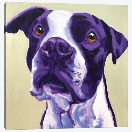 David The Pit Bull Canvas Print #DWG161} by DawgArt Canvas Art Print