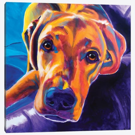 Lil Bear The Lab Canvas Print #DWG173} by DawgArt Canvas Artwork