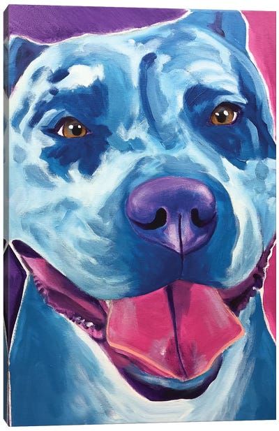 Merle The Pit Bull Canvas Art Print