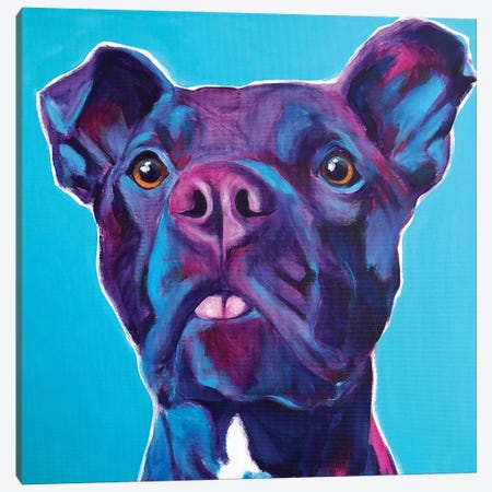 Neko The Pit Bull Canvas Print #DWG178} by DawgArt Canvas Wall Art
