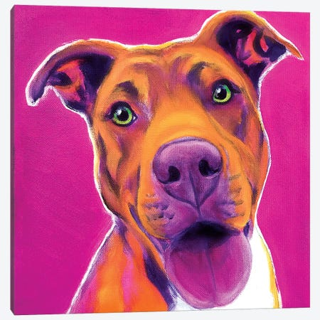 Bama The Pit Bull Canvas Print #DWG215} by DawgArt Canvas Art