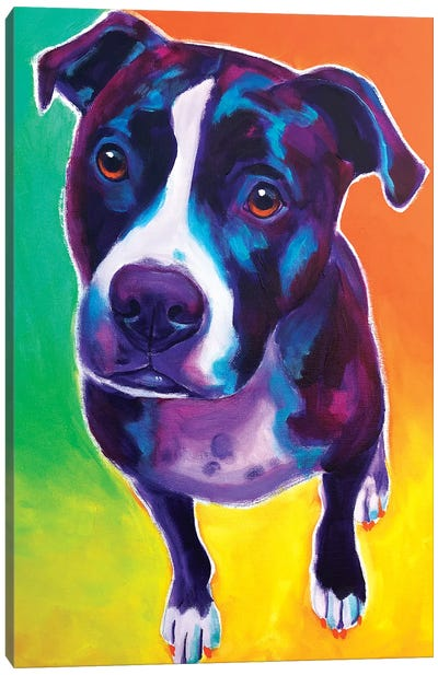 Truman The Pit Bull Canvas Art Print