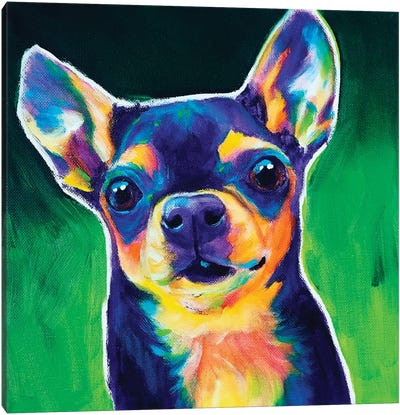 Chihuahua - Jack Canvas Art Print