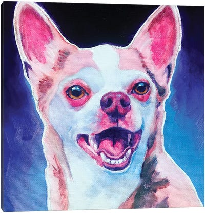 Chihuahua - Paco Canvas Art Print