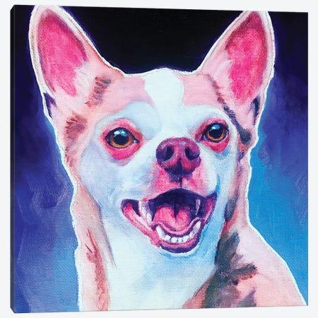 Chihuahua - Paco Canvas Print #DWG229} by DawgArt Canvas Artwork