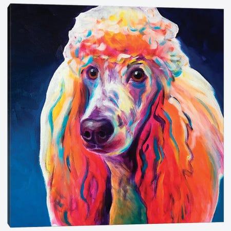 Poodle - Hans Canvas Print #DWG233} by DawgArt Canvas Art Print