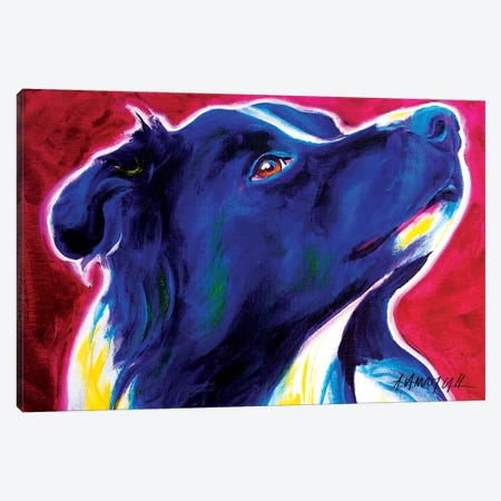 Bright Future The Border Collie Canvas Print #DWG26} by DawgArt Art Print