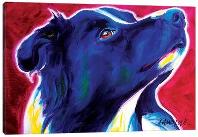 Bright Future The Border Collie Canvas Art Print