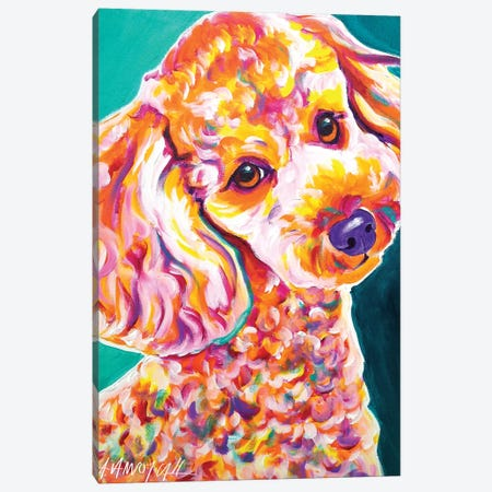 Curly The Poodle Canvas Print #DWG42} by DawgArt Canvas Artwork