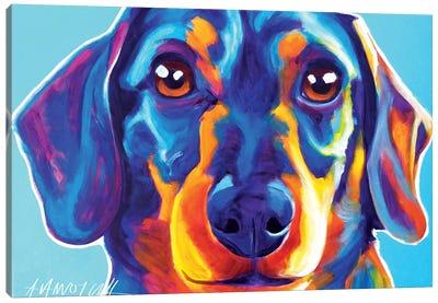 Dachshund Oscar Canvas Art Print