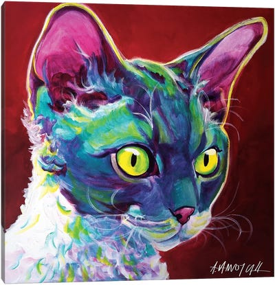 Devon Rex Canvas Print #DWG47