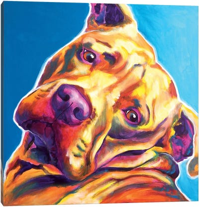 Dozer The Pit Bull Canvas Art Print