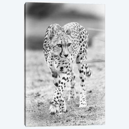 Cheetah Canvas Print #DWH10} by David Whelan Canvas Art