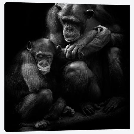 Chimpanzee Family Canvas Print #DWH11} by David Whelan Canvas Artwork