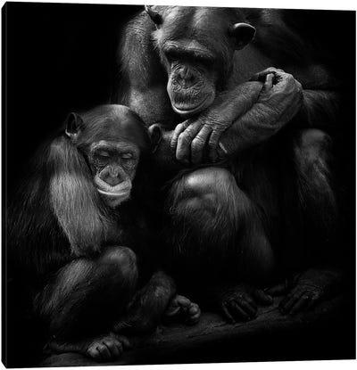 Chimpanzee Family Canvas Art Print
