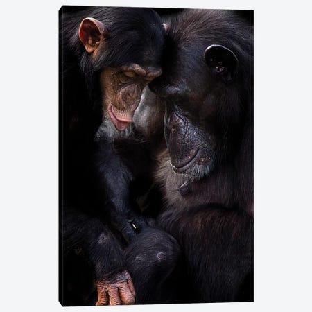 Chimpanzees Canvas Print #DWH12} by David Whelan Canvas Art