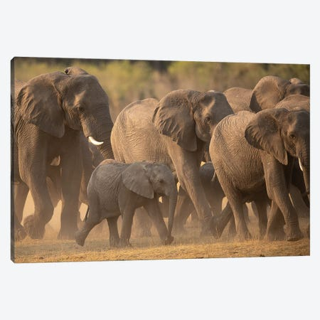 Elephant Family Canvas Print #DWH19} by David Whelan Canvas Art