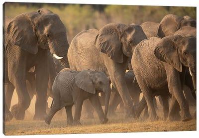 Elephant Family Canvas Art Print