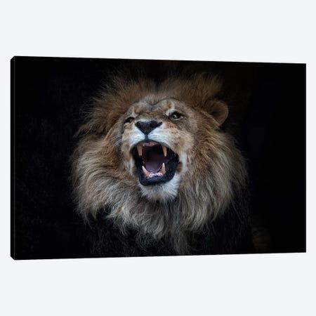 African Lion Canvas Print #DWH1} by David Whelan Canvas Print