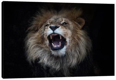African Lion Canvas Art Print