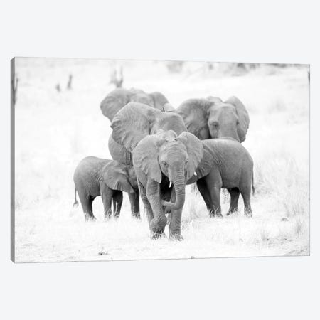 Elephant Family Black And White Canvas Print #DWH20} by David Whelan Canvas Print