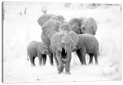 Elephant Family Black And White Canvas Art Print