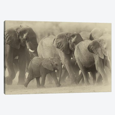 Elephant Family Sepia Canvas Print #DWH21} by David Whelan Canvas Art Print