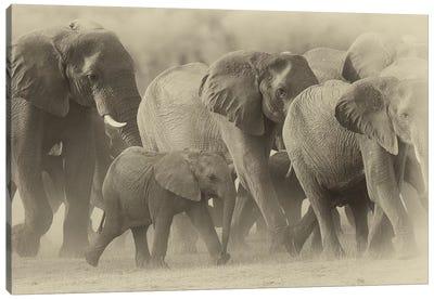 Elephant Family Sepia Canvas Art Print