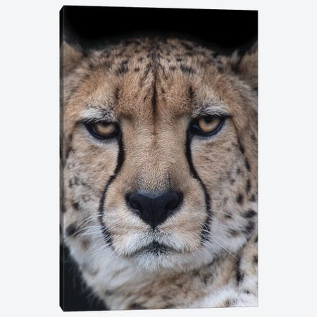 Face Of An Athlete Canvas Print #DWH23} by David Whelan Art Print