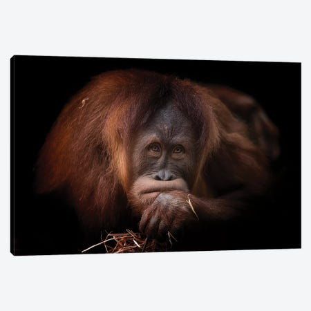 Grumpy Canvas Print #DWH25} by David Whelan Canvas Wall Art