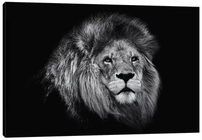 African Lion In Black And White Canvas Art Print