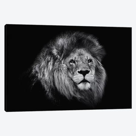 African Lion In Black And White Canvas Print #DWH2} by David Whelan Art Print
