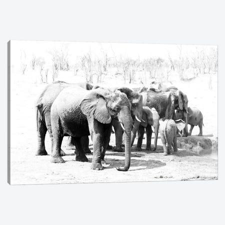 Hwange Elephants Canvas Print #DWH30} by David Whelan Canvas Art