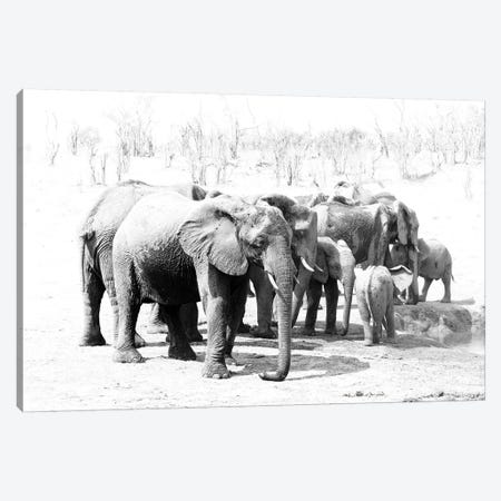 Hwange Elephants Canvas Print #DWH30} by David Whelan Canvas Art