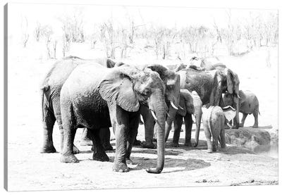 Hwange Elephants Canvas Art Print