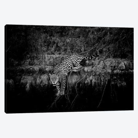 Jaguar On Cliff Canvas Print #DWH34} by David Whelan Canvas Print