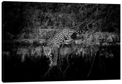 Jaguar On Cliff Canvas Art Print